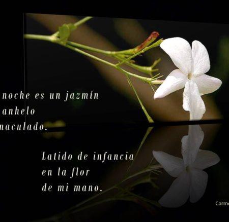 Flor de mi mano…